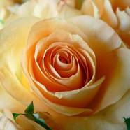 Flores comestíveis, 17 de Março das 10:00 – 13:00