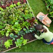 Atelier práctico de criação de um jardim de plantas medicinais, 3 de Março das 10:00-13:00