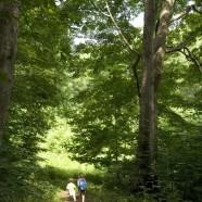 Girassol na Quinta_Dia dedicado às árvores, 2 de Maio das 10:00 às 13:00 e das 14:00 às 18:00