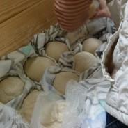 Vamos fazer pão!; Sábado 11 de Maio das 15:00 às 17:30