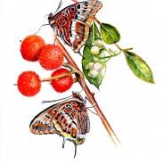 1,2,3,4.Nasceu uma borboleta; Sábado 9 de Novembro das 10:30 às 12:30