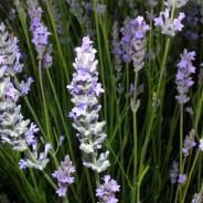Workshop Plantas aromáticas e medicinais e suas utilizações – Sábado, 25 de Março