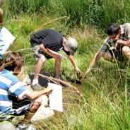 Workshop Vem conhecer o habitat natural dos charcos – Sábado, 1 de Abril