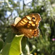 Vem descobrir o maravilhoso mundo das borboletas – Sábado, 24 de Junho