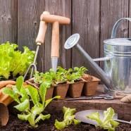 Workshop de Iniciação à Jardinagem – Sábado, 16 de Março
